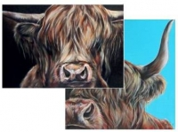 Highland cattle-kortti